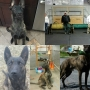 Dogs for Sale young adults Dutch Shepherd