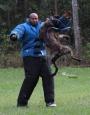 Stud Dogs Dutch Shepherd